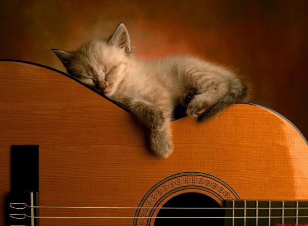 guitar pic (8)